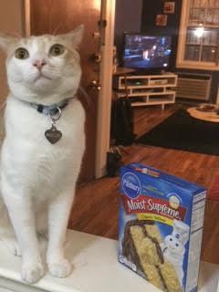 Katė, darančios įvairius triukus