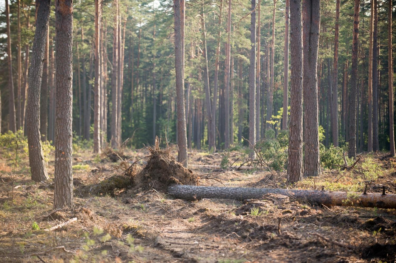 Išvirtę medžiai